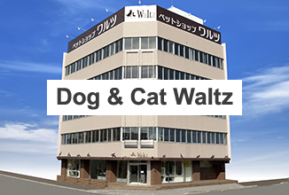 Dog & Cat Waltz