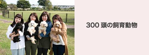300頭の飼育動物