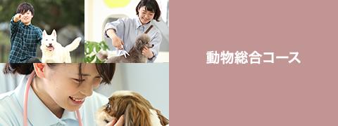 動物総合コース