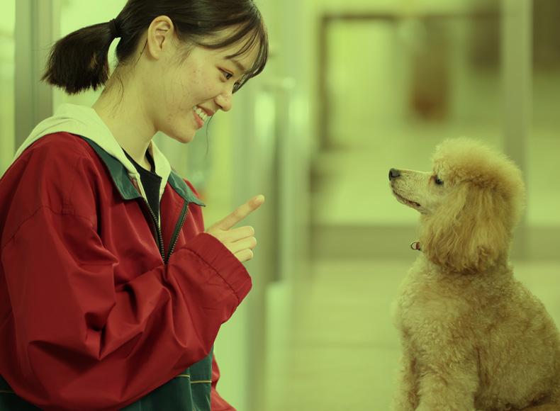 家庭犬しつけ保育士コース
